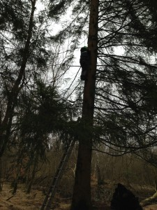 Jonas i grantræet